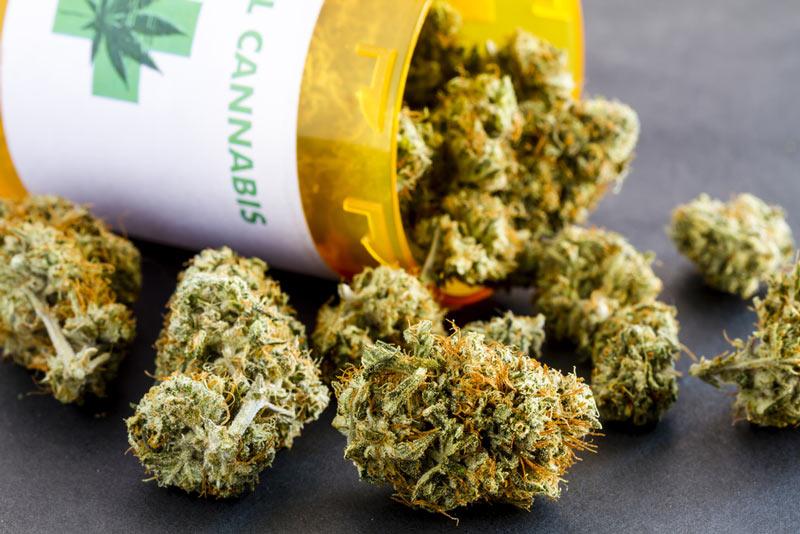 Medical Marijuana Strains & Uses | Shango