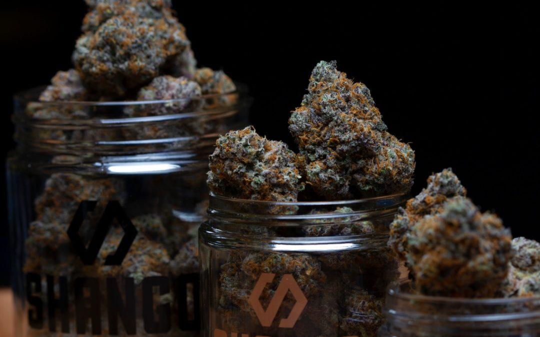 Delve into the world of the strongest marijuana strains